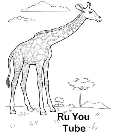 Картинки для детей жираф без пятен
